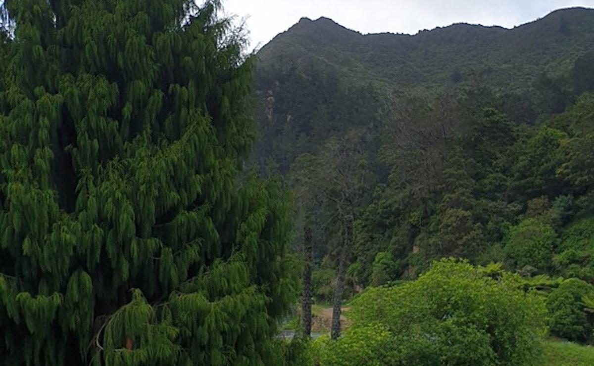 Mount Karangahake Summit Walk