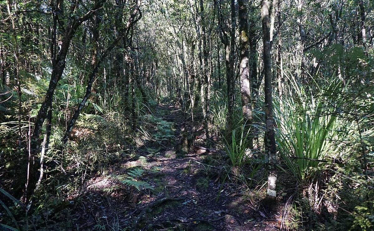 Aongatete Forest Restoration Trust Walk